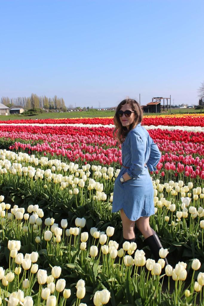 Tulip Festival in WA